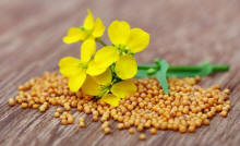 Mustard Seeds - Not Just a Condiment