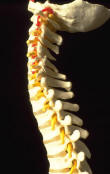 Bone Loss & Chinese Medicine