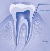 Image of Tooth Anatomy